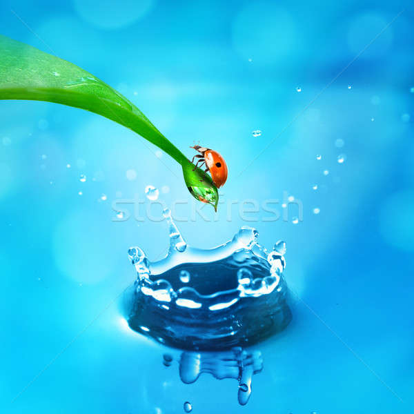 lady bug on green leaf and water splash Stock photo © artjazz