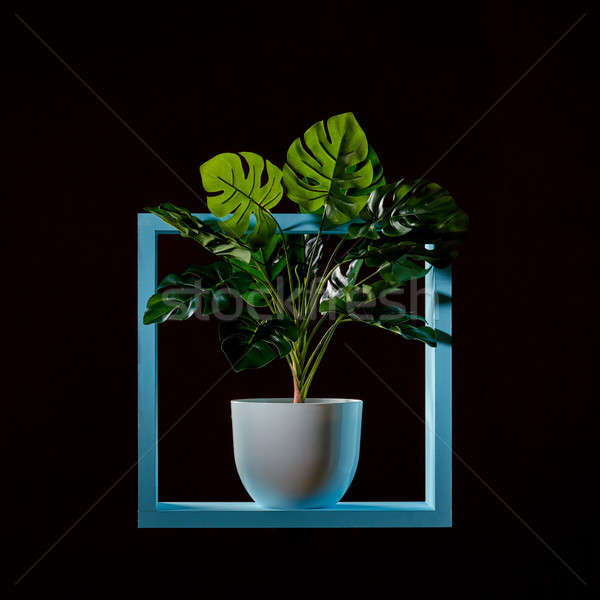 Monstera green plant on a wooden green frame isolated on black Stock photo © artjazz