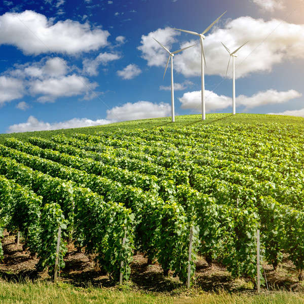 Szőlőskert tájkép szél kék ég fa fű Stock fotó © artjazz