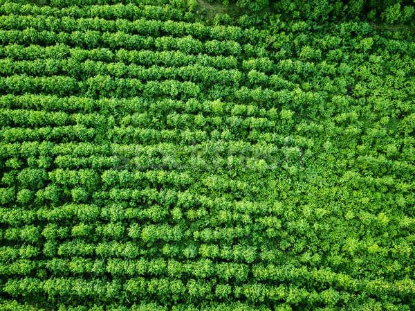 Légifelvétel vidéki mező mezőgazdaság természetes fotó Stock fotó © artjazz