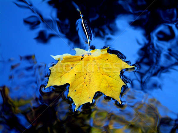Yellow leaf in blue water Stock photo © artjazz