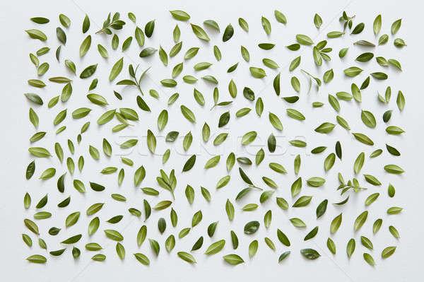 Foglie verdi bianco frame piccolo foglie post Foto d'archivio © artjazz