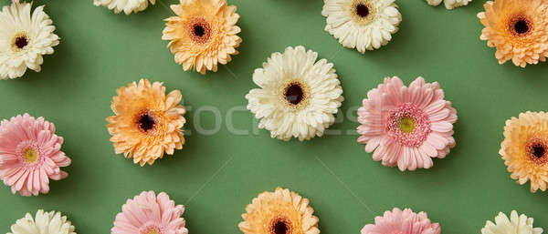 Flower pattern of different colorful gerberas isolated on green Stock photo © artjazz