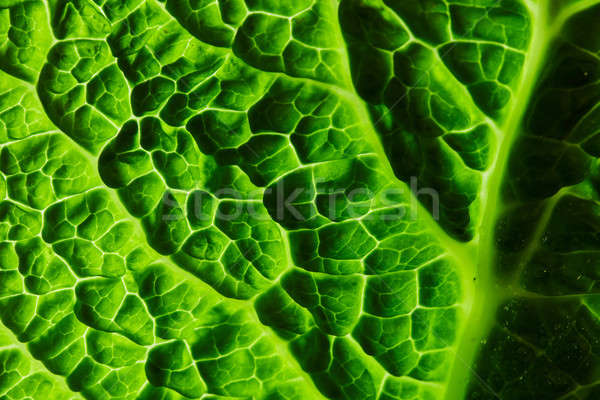 fresh savoy cabbage leaf Stock photo © artjazz