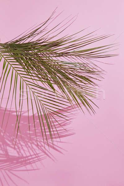 Trópusi pálmalevél rózsaszín hely szöveg természet Stock fotó © artjazz