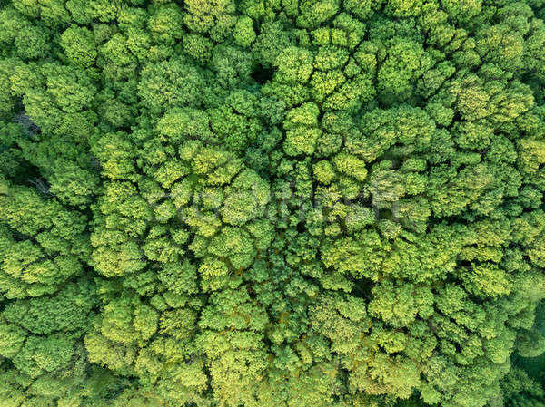 Top view of the forest. Nature background. Photo from the drone Stock photo © artjazz