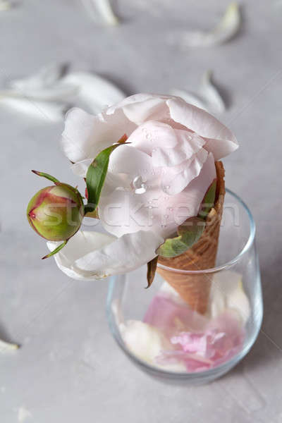 A fresh pink peony bud with drops of water in a waffle cone in a glass on a gray background with pet Stock photo © artjazz