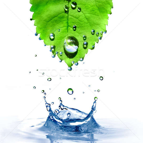 Feuille verte gouttes d'eau Splash isolé blanche monde Photo stock © artjazz