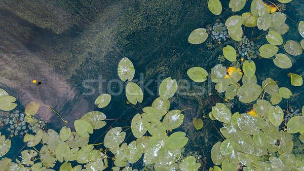 красивой белый желтый пруд Сток-фото © artjazz