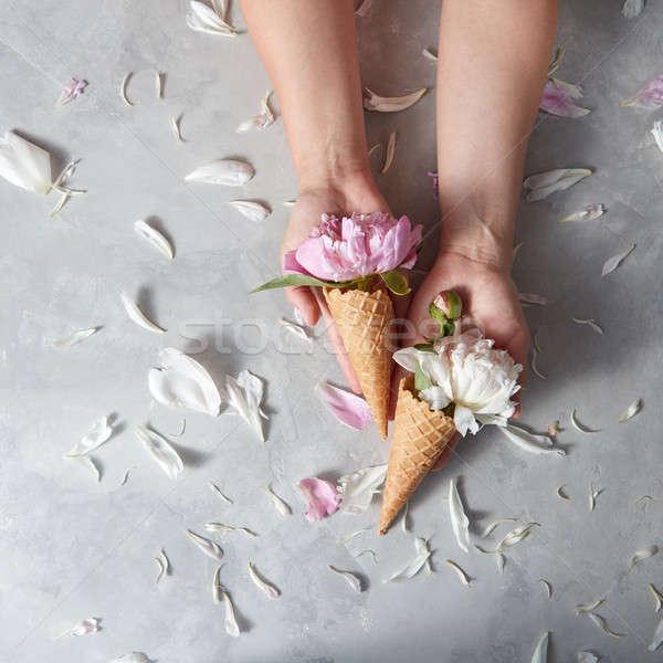 Fresco tenro rosa branco hóstia Foto stock © artjazz