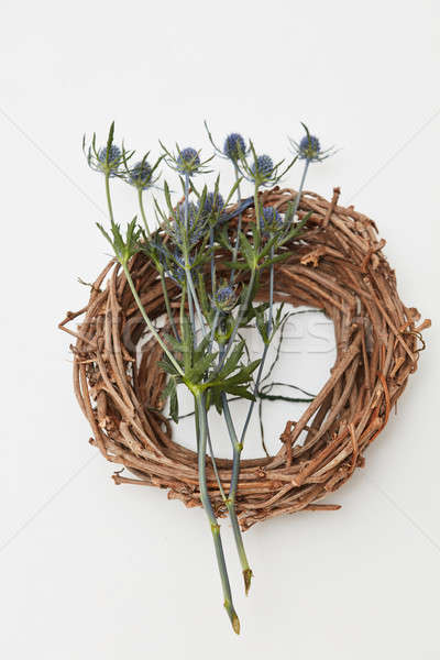 Top view of empty bird nest with dry flowers isolated on white Stock photo © artjazz