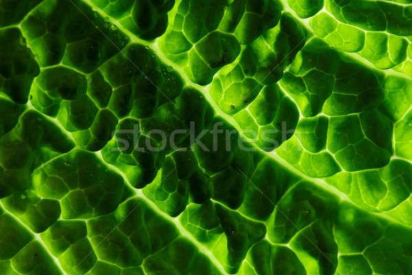 fresh savoy cabbage leaf Stock photo © artjazz