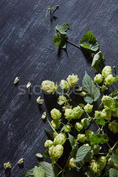Fresche verde hop ramo legno legno Foto d'archivio © artjazz