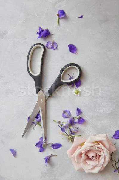 Foto stock: Tesoura · cinza · flores · rosa · baixo · direito