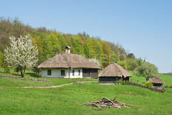 old houses against green forest Stock photo © artjazz