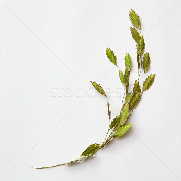 Floral composition with little green leaves Stock photo © artjazz