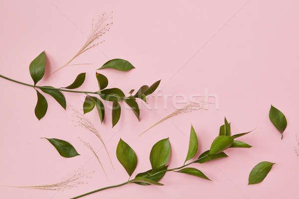 Green twigs isolated Stock photo © artjazz
