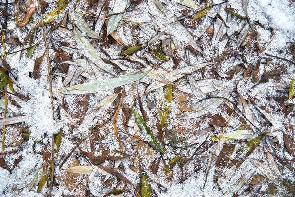 Yaprakları don ağaç ahşap doğa kar Stok fotoğraf © artjazz