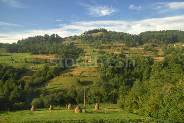 Summer mountains landscape in Carpathians, Ukraine Stock photo © artjazz