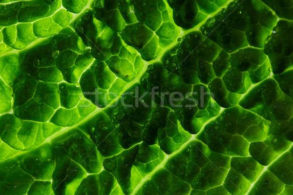 キャベツ 葉 新鮮な 背景 サラダ 食べ ストックフォト © artjazz
