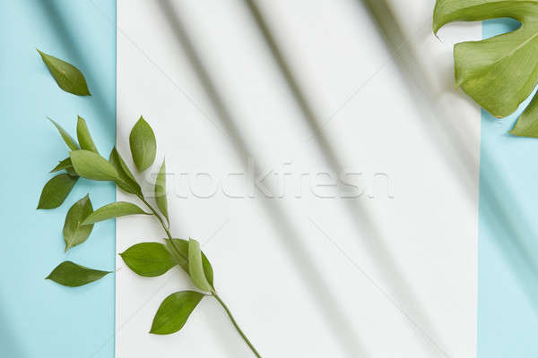 Green twig covering blank copy space Stock photo © artjazz