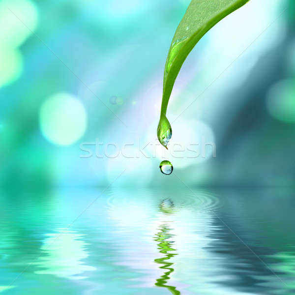 green leaf with water drop water on blue sunny background Stock photo © artjazz
