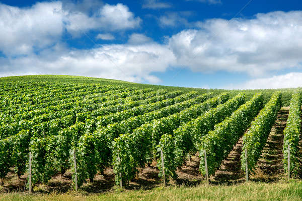 Bağ manzara Fransa yol arka plan güzellik Stok fotoğraf © artjazz