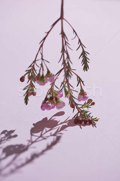 ág rózsaszín virágok lefelé kreatív tükröződés Stock fotó © artjazz