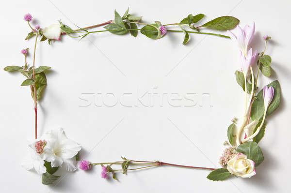 Stok fotoğraf: çiçekler · çerçeve · beyaz · yalıtılmış · uzay · metin
