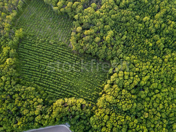 View from the top of the old and new forest of a forested forest Stock photo © artjazz