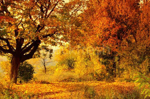 Stock foto: Herbst · Wald · Himmel · abstrakten · Natur · Landschaft