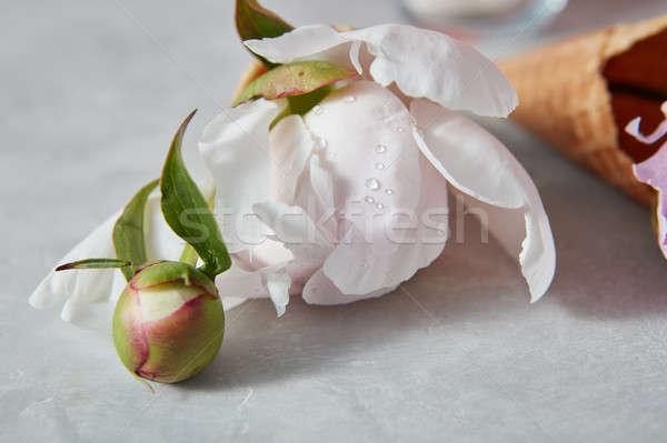 Tröpfchen Wasser weiß schönen Blume grau Stock foto © artjazz