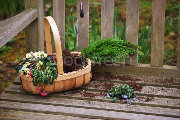 Flower basket Stock photo © Artlover