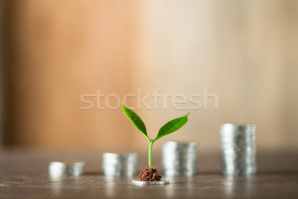Four piles of money laid on wood, wood background, natural light, finance, interest, increase, four  Stock photo © artrachen
