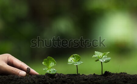 Stock photo: plant a tree,Protect the tree,Hand Help the tree,Growing step,Watering a tree,care tree,nature backg