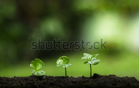Plant a tree in nature,coffee tree,fresh, Stock photo © artrachen