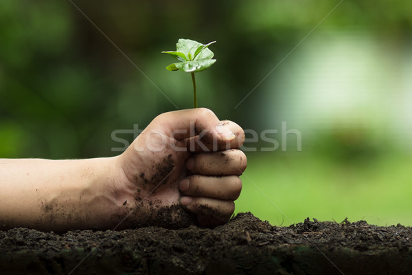 Hands protect trees, plant trees, hands on trees, love nature Stock photo © artrachen