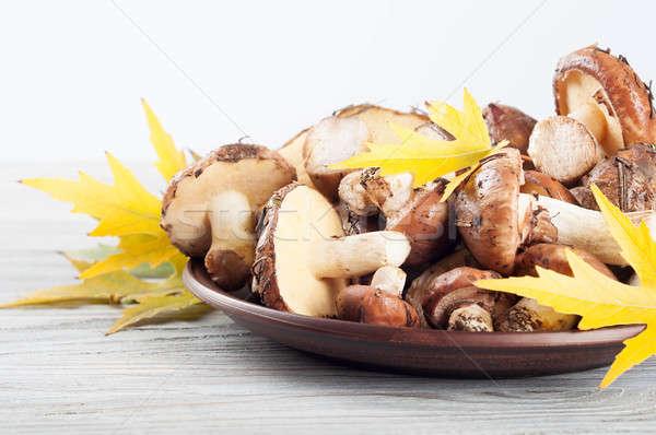 Сток-фото: грибы · глина · пластина · съедобный