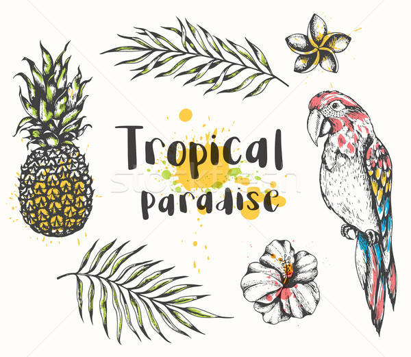 Parrot and tropical plants Stock photo © Artspace