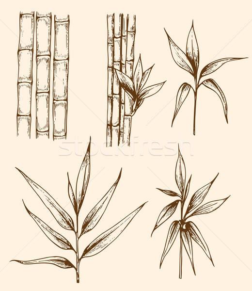 Vintage bambu ramo conjunto Foto stock © Artspace