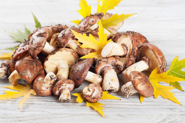 Forest mushrooms and yellow leaves Stock photo © Artspace