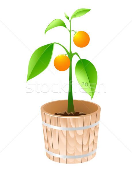 Narancsfa fából készült kád izolált fehér természet Stock fotó © Artspace