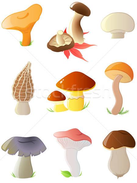 Glanzend bos champignons ingesteld vector Stockfoto © Artspace