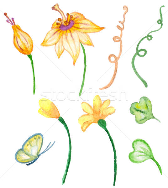 Vízfesték virágmintás elemek terv szett vektor Stock fotó © Artspace