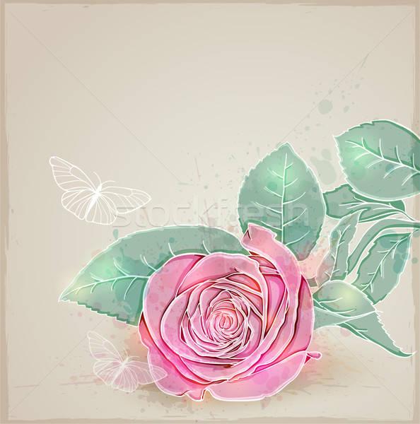 Pink rose Stock photo © Artspace