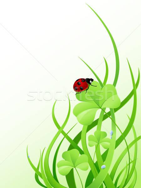 зеленая трава Коровка клевера весны природы лет Сток-фото © Artspace