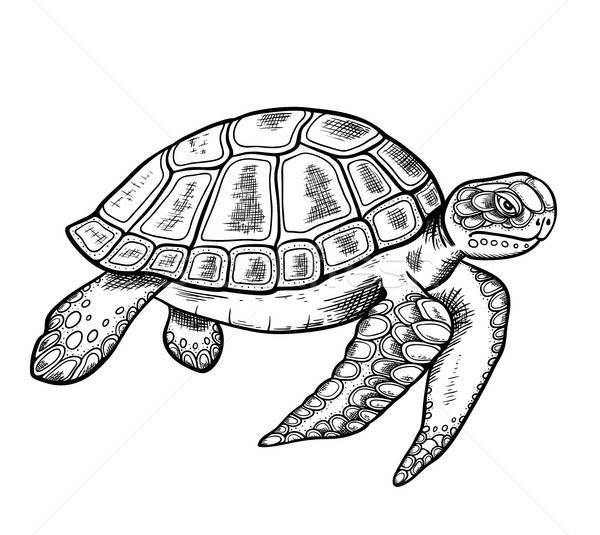 Hand drawn sea turtle Stock photo © Artspace
