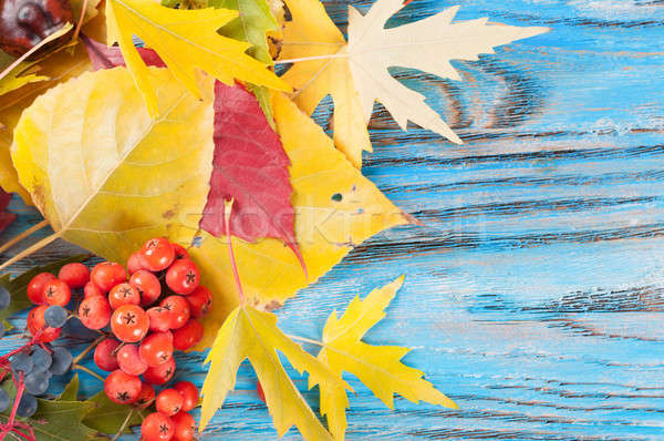 Autumn leaves and berries Stock photo © Artspace