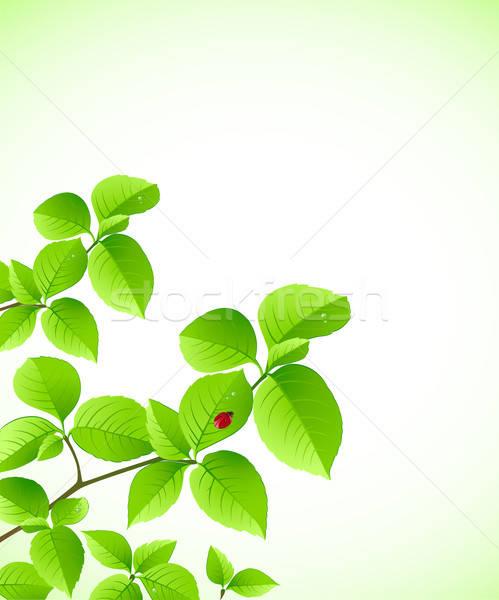 Yeşil şube vektör uğur böceği yaz bitki Stok fotoğraf © Artspace