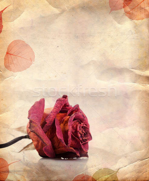 Dried red rose and leaves Stock photo © Artspace